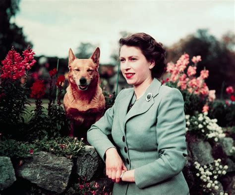 queen elizabeth s dog queen elizabeth may adopt her late gamekeeper s dogs now