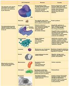organelle with its function images biology