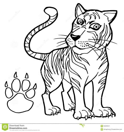 coloring page tiger paw tiger with paw print coloring page vector stock vector