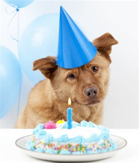 birthday cakes for dogs the ultimate guide to birthday cake recipes irresistible pets