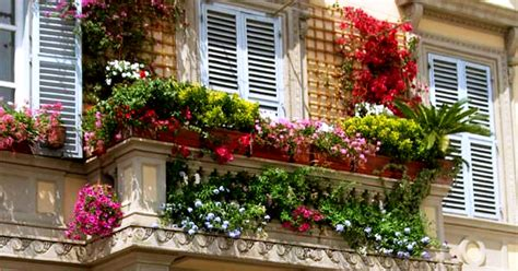 balcony wall garden top ideas to decorate your balcony garden with creepers