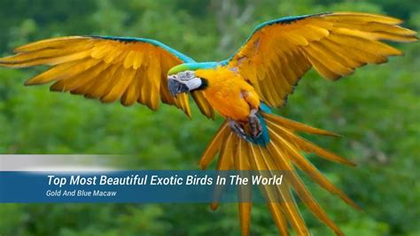Birds Top top most beautiful birds in the world pet news