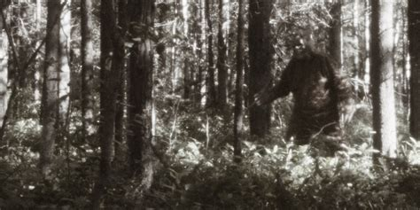 bigfoot pictures bigfoot is wandering michigan s property and