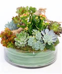 succulents and driftwood succulent plants flower shop