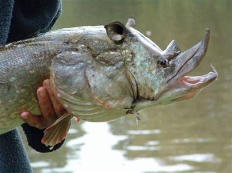 images  scary creatures  pinterest devil