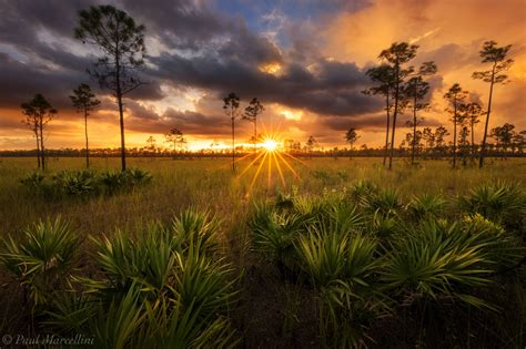 everglades and big cypress florida florida landscape