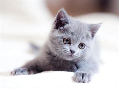 imagenes de gatitos llorando me he encontrado un gato llorando 191 qu 233 hago