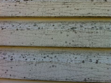 mold on side of house vinyl siding cleaning extreme pressure washing commercial residential