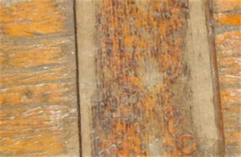 deck stain failure  deck stain reviews ratings