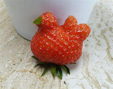 Payung Anak Corak Buah Strawberry 11 foto buah dengan bentuk unik aneh dan keren