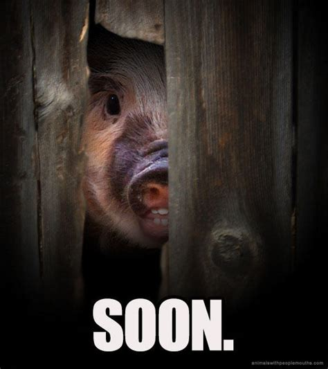Meme Soon - soon meme piggy soon know your meme