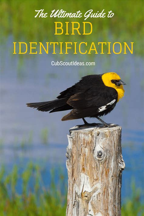 ultimate guide to bird identification for cub scouts cub