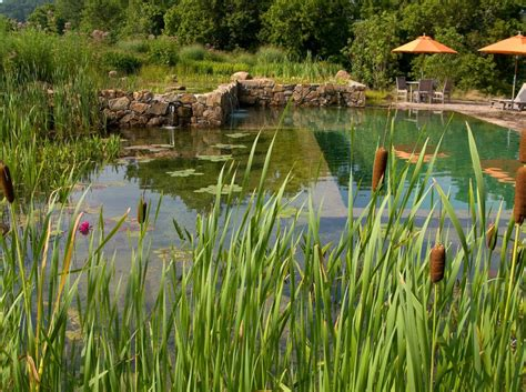 Natural Pool by Natural Swimming Pond Eco Natural Swimming Pools
