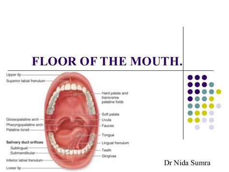 anatomy of the tongue slideshare floor of the mouth