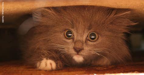 warum pinkelt meine katze in die wohnung warum versteckt sich meine katze katzen lieben feliway