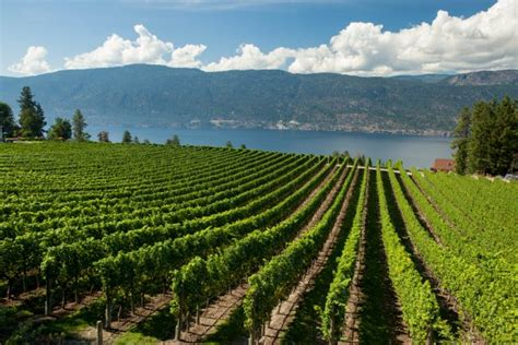Bc Records 2016 High Expectations For 2016 Bc Vintage