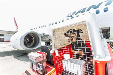 australia s leading air freight carrier qantas freight