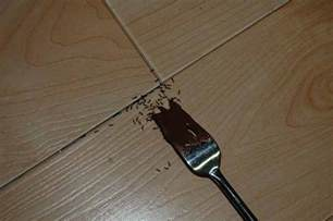 black ants in kitchen how to get rid of black ants 10 best black ant killers