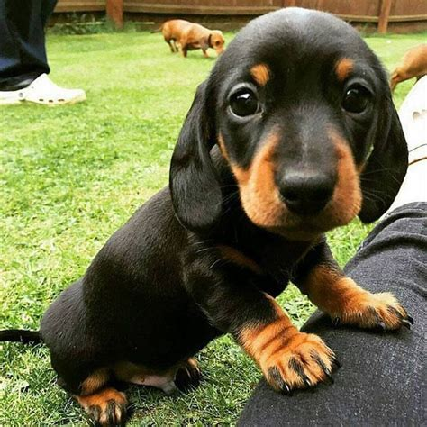 best puppies to get best 25 dogs ideas on dogs and puppies beautiful breeds and