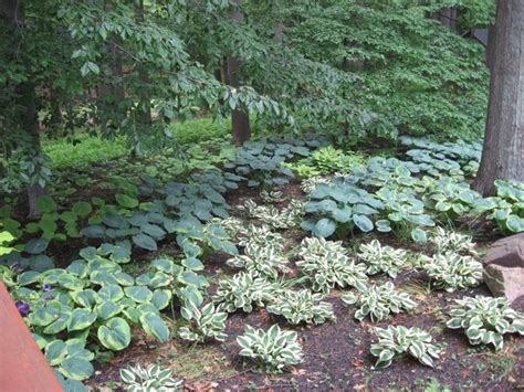 Landscape Design With Hostas Hosta Shade Garden Traditional Landscape