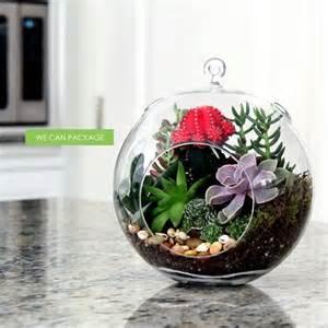 Glass Vase Pebbles 8 Inches Hanging Glass Terrarium Succulent Cactus Moss