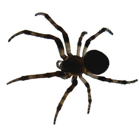 species of arachnida and myriopoda scorpions spiders mites ticks and centipedes injurious to classic reprint books arachnids chrisbrad148