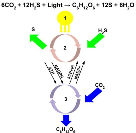 difference between l and light difference between photochemical and thermal reaction l