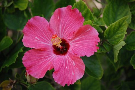 Tropical Flowers zone five and a half snowbird in paradise florida s