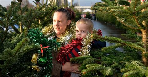 morrison xmas trees pictures families to morrisons in eccles for tree competition manchester