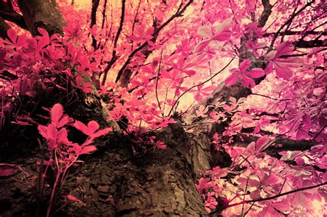 pink leaves by reesy1080 on deviantart