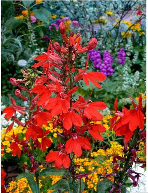 tropical flower garden colorful tropical garden flowers jpg 1 comment hi res