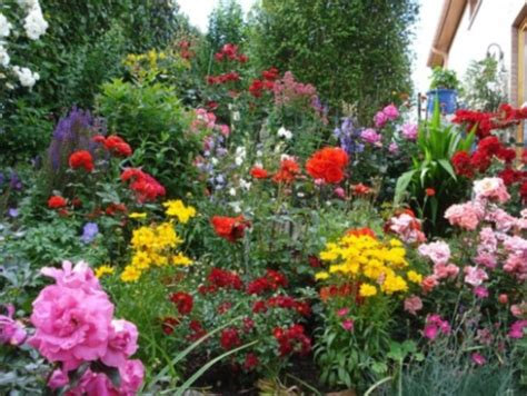 different types of garden plants types of flowers pictures different blue and
