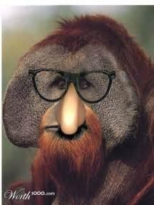 orangutan clown weird looking animals pinterest