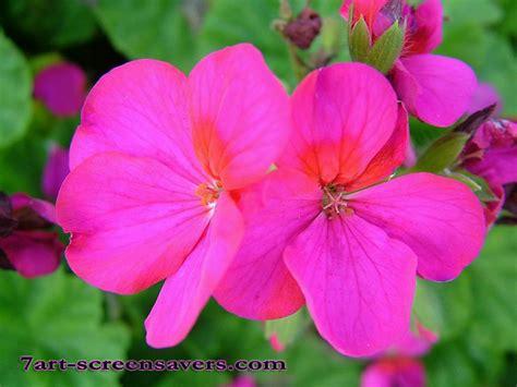 flower screensaver wallpaper flower screensaver pictures free best hd wallpapers