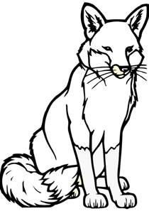 drawings to color fox drawing fox coloring pages foxy fox