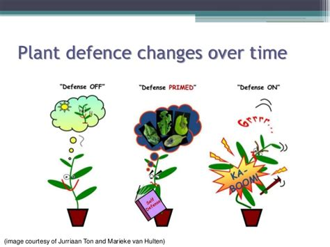 insect plant interactions