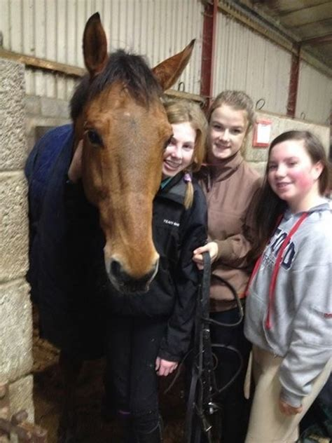 meet and greet at maxi zoo hungry horse outside child teenage saturday c clonshire equestrian centre