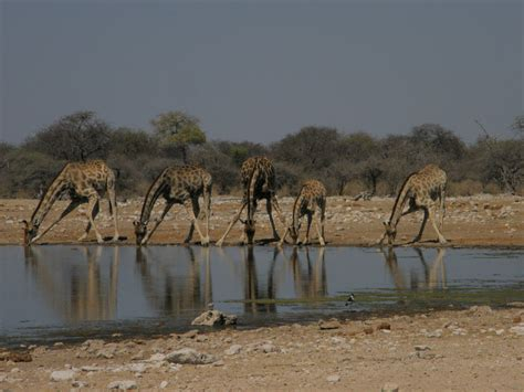 turisti per caso namibia caleidoscopio namibiano viaggi vacanze e turismo