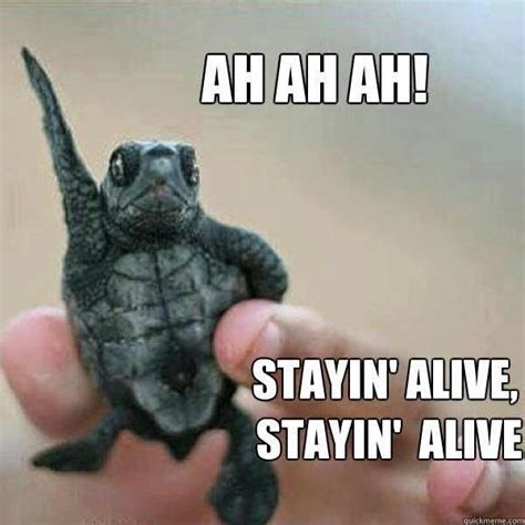 Funny Turtle Memes - and they all fall down spring break is here meme