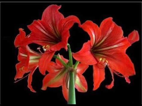 fiori belli fiori belli