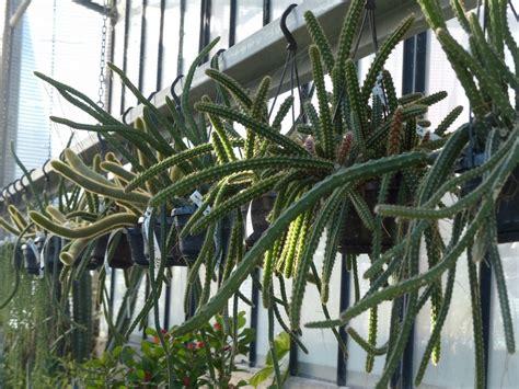 dove trovare vasi per orchidee il giardino dei giorgi lavagna coltivazione vendita