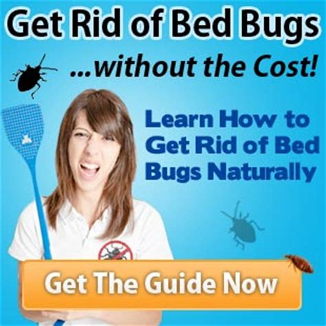 the best way to get rid of bed bugs best way to kill bed bugs image via best way to get rid