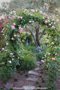 climbing roses trellis climbing trellis design ideas and practical info