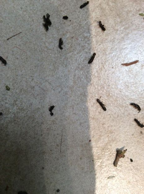 why do i have termites in my bathroom all about termites