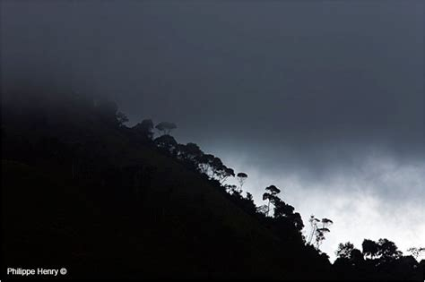 a forest in the clouds my year among the mountain gorillas in the remote enclave of dian fossey books the andean book by philippe henry the canadian