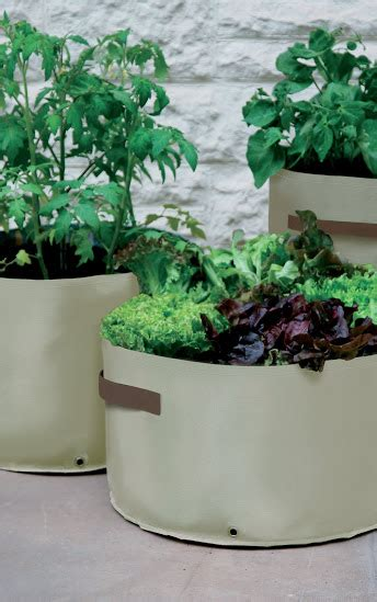 Haxnicks Patio Planters by Haxnicks Vegetable Patio Planter Pack Of 3 163 15 69