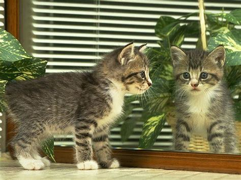 kitten wallpaper for pc funny kitten wallpaper funny animal