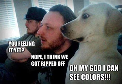 Funny Drug Memes - site unavailable