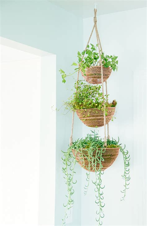 indoor hanging plants dramatic and gorgeous spill plants make me pinterest