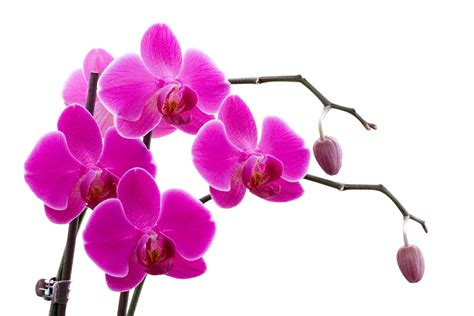 Farbe Orchidee by Orchid Color Wallpaper Www Imgkid The Image Kid